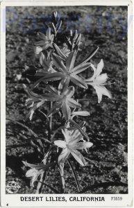 DESERT LILLIES CALIFORNIA RPPC (F3559)CALIFORNIA DESERT