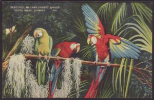 Macaws,Parrot Jungle,South Miami,FL Postcard
