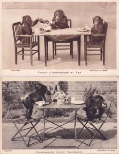 Chimpanzee Tea Party Whipsnade 2x Old Monkey Postcard s