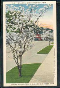 Tennessee colour PC Springtime Dogwood Blloms, Gatlinburg, unused