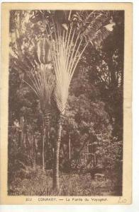 CONAKRY, Guinea, 00-10s la Plante du Voyageur