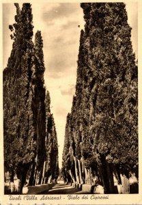 Italy Tivoli Villa Adriana Viale dei Cipressi