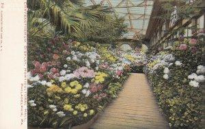 PHILADELPHIA, Pennsylvania, 00-10s; Chrysanthemum Display, Horticultural Hall