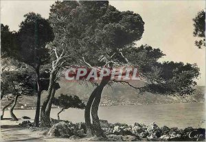 Postcard Modern chin 12923 view from the Cap Martin