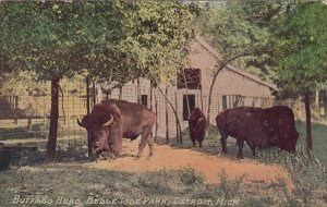 DETROIT , Michigan , 1911 ; Buffalo Herd , Belle Isle Park