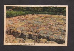 NY Petrified Forest Gardens Wood Trees Saratoga Springs New York Postcard Linen