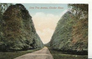 Nottinghamshire Postcard - Lime Tree Avenue, Clumber House, Nottingham - TZ1276