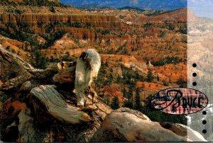 Utah Bryce Canyon National Park 1997