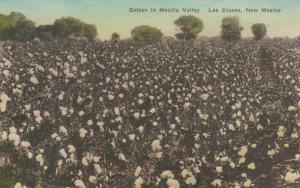 LAS CRUCES , New Mexico, 1921 ; Cotton Field in Mesilla Valley