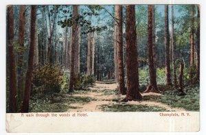 Champlain, N.Y., A walk through the woods at Hotel