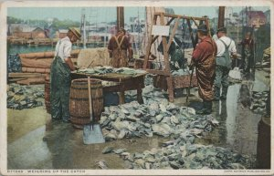 Weighing up the catch vintage postcard