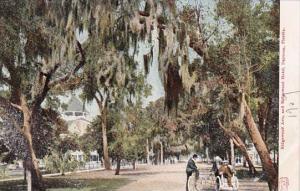 Florida Daytona Bicycles On Ridgewood Avenue Showing Ridgewood Hotel 1905