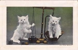 Try Your Weight Cats With Scales Antique Kitten Postcard