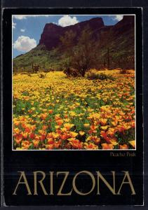 Poppies,Picacho Peak,AZ BIN