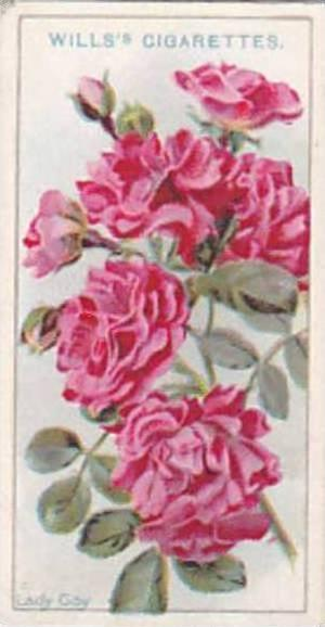 Wills Vintage Cigarette Card Roses 1926 No 24 Lady Gay