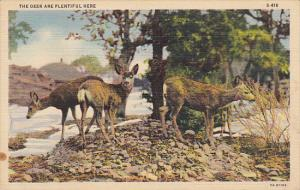The Deer Are Plentiful Here Curteich