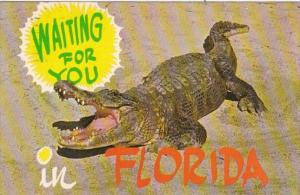 Florida Alligator Waiting For You 1983
