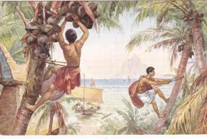 Men harvesting  coconuts, 00-10s
