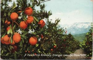 California Anomaly Oranges near Snowfields CA Postcard D86 *As Is