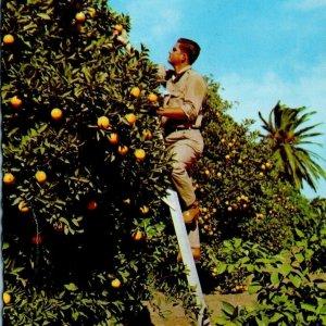 James Hanshaw McAllen Texas Ruby Red grapefruit Rio Grande Valley RPPC Citrus