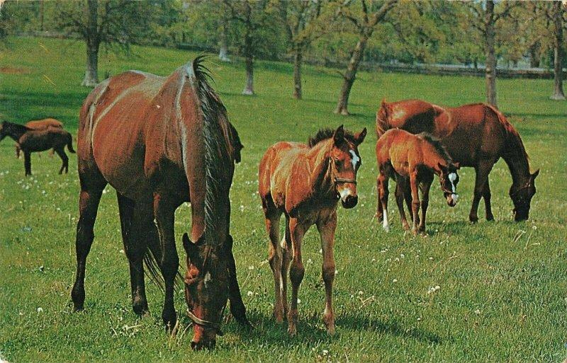 Postcard Horses Grazing Together ME8.