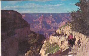 Mule Back Train Grand Canyon National Park  Arizona