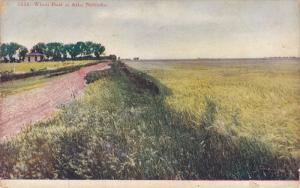 Wheat Field , ALDA , Nebraska , PU-1908