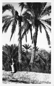 Lot121  gabes harvest of legumi palm wine tunisia africa real photo