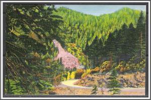 North Carolina Great Smoky Mountains National Park - [NC-022]