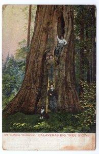 California Wonderland, Calaveras Big Tree Grove