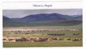 Mongolia,Asia,80-90s,Famo us Horse Breeder Gathering His Horse & Selecting Th...