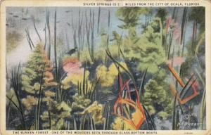 Florida Silver Springs Sunken Forest Seen Through Glass Bottom Boat 1931 Curt...