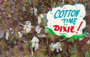 Mississippi Cotton Time In Dixie Cotton Bolls