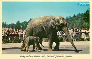 OR, Portland, Oregon, Zoological Gardens, Packy baby Elephant, Curteichcolor