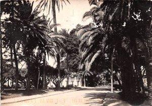Jardin d'Essai Alger Algeria 1996