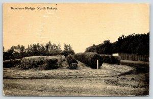 Fargo North Dakota~Bussiam Hedge Farm on the Highway~Rows of Shrubs~1912 PC