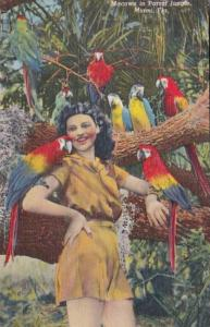 Florida Miami Macaws In Parrot Jungle