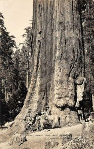 RPPC General Grant Tree CA National Park French Photo c1920s Vintage Postcard