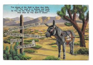 All You Need Jackass and Luck Signpost Cactus Gold Mule Ass Humorous Postcard