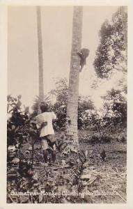 RP: Sumatra - Monkey Climbing for Coconuts, Indonesia , 20-30s