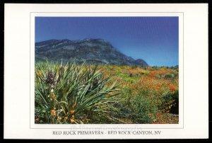 Red Rock Primavera - Red Rock Canyon