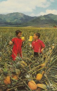 HAWAII, 1940-60s; Boys eating Ripe Pineapples in the Field