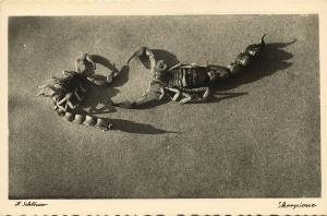 libya, Scorpions in the Desert (1940s) H. Schlösser Photo