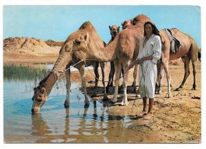 Tunisia Ile De Djerba Oasis Camels Vintage 1965 Postcard