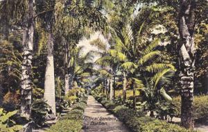 Palm Walk, Botanical Gardens, Durban, South Africa, 1900-1910s