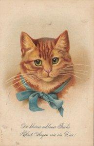 Cat Portrait , 1908