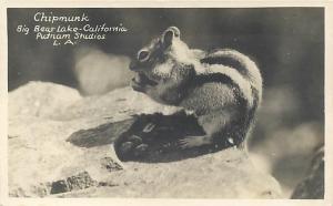RPPC  BIG BEAR LAKE, California  CA  CHIPMUNK  Putnam Studios 1930s-40s Postcard
