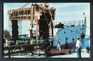 Brownsville, Texas/TX Postcard, Unloading Bananas At Port