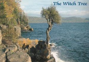 Minnesota Grand Portage The Witch Tree