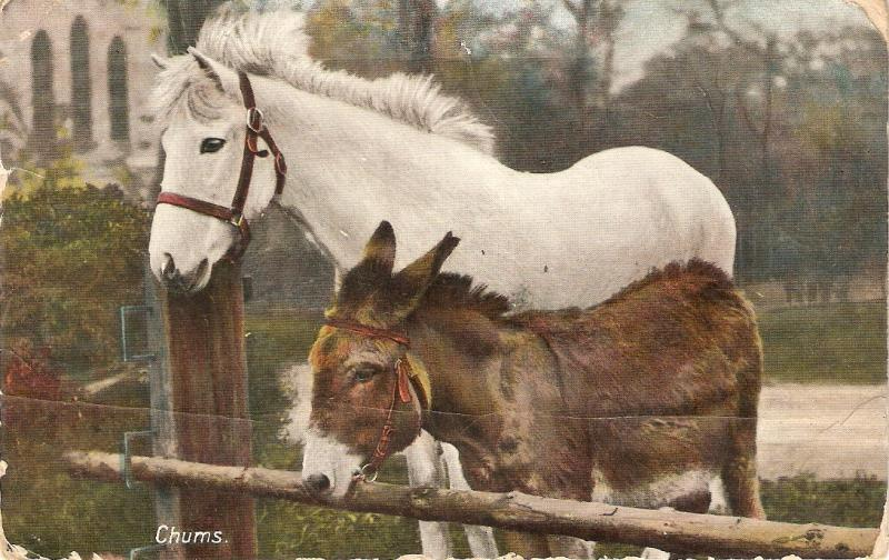 White Horse and donkey. Chums Tuck Rapholette Series PC # 8097